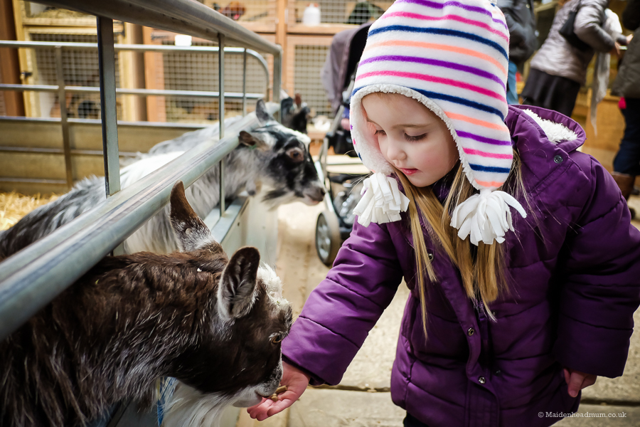 Odds Farm: Fun for the family, whatever the weather
