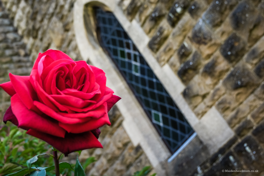 A rose outside the church at St Marks hospital.