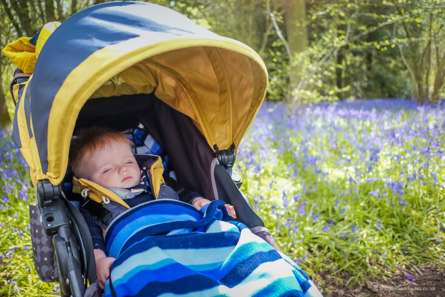 Maidenhead Mum Blog: Baby activities Maidenhead, Walk in the bluebells woods