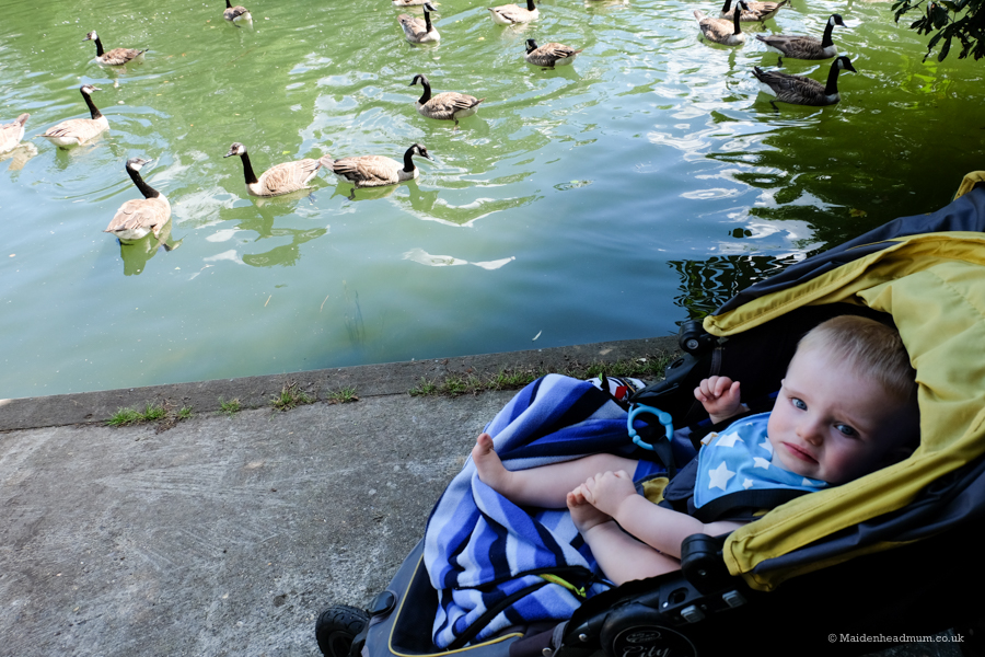 Maidenhead mum blog: Baby activities maidenhead, feeding the ducks in Guards Park