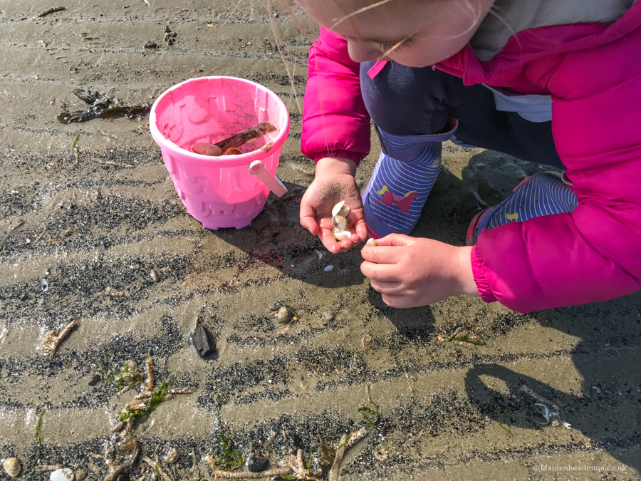 West Wittering beach: collecting shells.