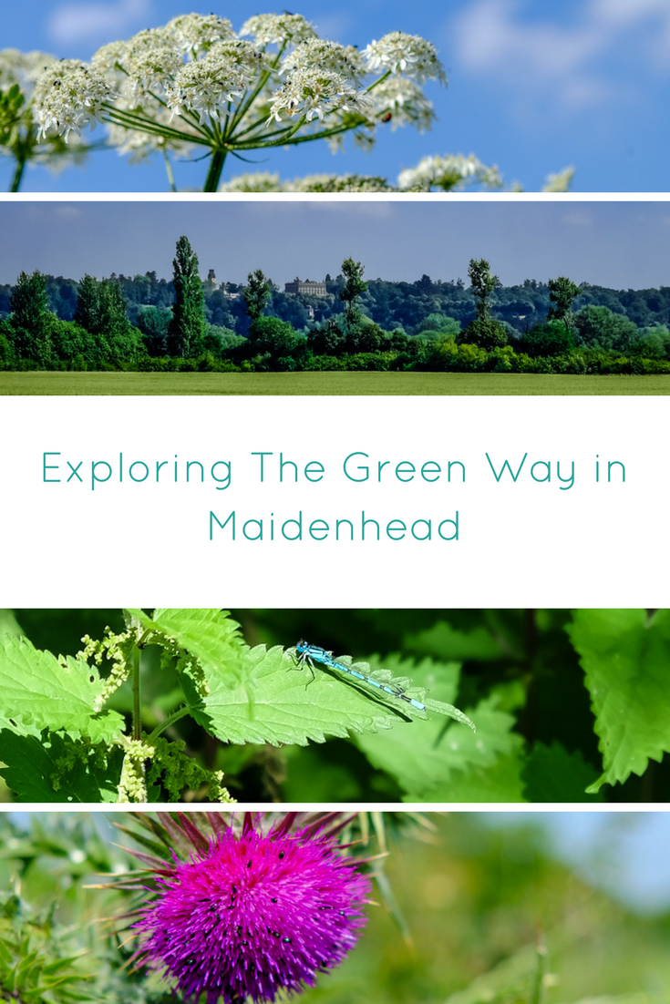 The Green Way is a public footpath lining Maidenhead, Cookham and Bray. This post has useful info on what to spot along the route.