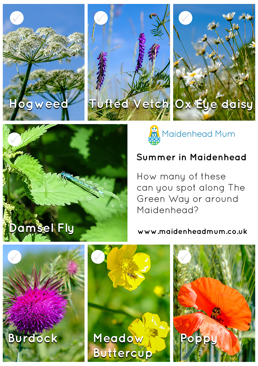 Things to spot in summertime along The Green Way in Maidenhead