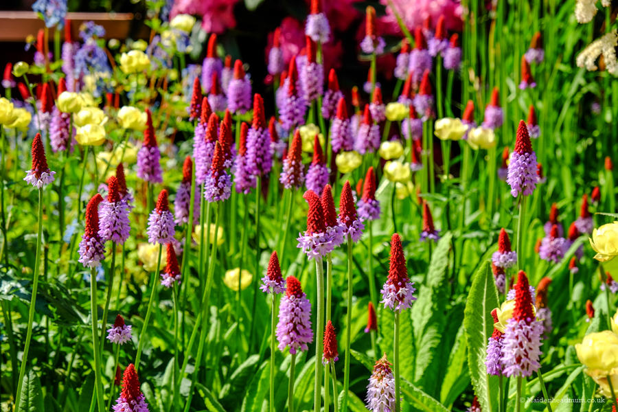 Close upon flowers at The Chelsea Flower Show