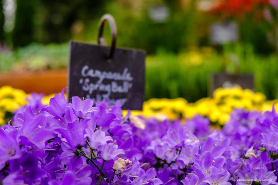 The Chelsea Flower Show