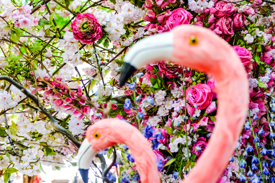 The shops around Chelsea have beautiful floral displays in the week of the Chelsea Flower Show