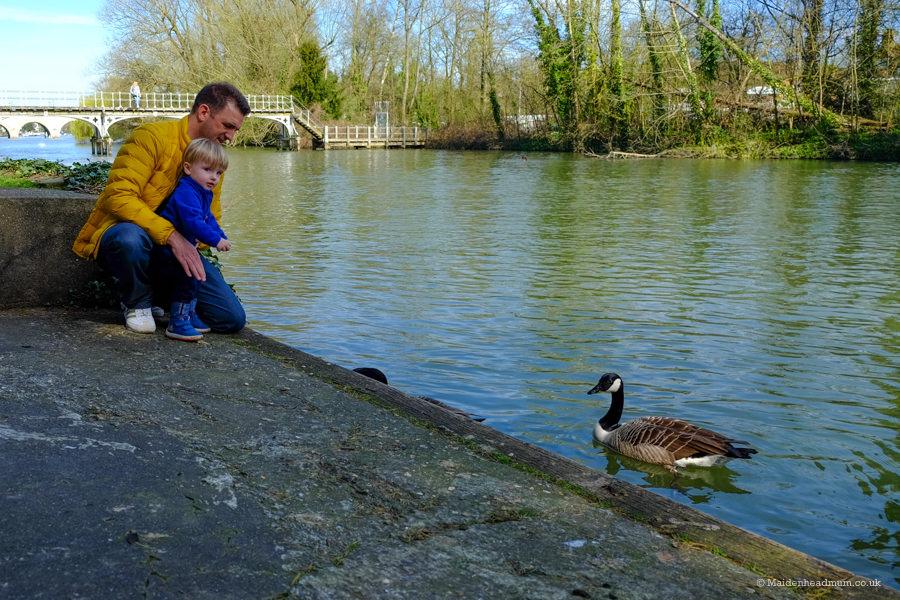 feeding the ducks at Guards club park in Maidenhead