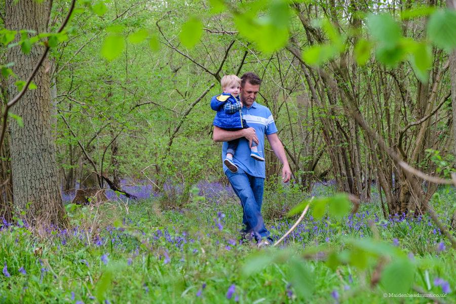 bluebells in thriftwood park Maidenhead