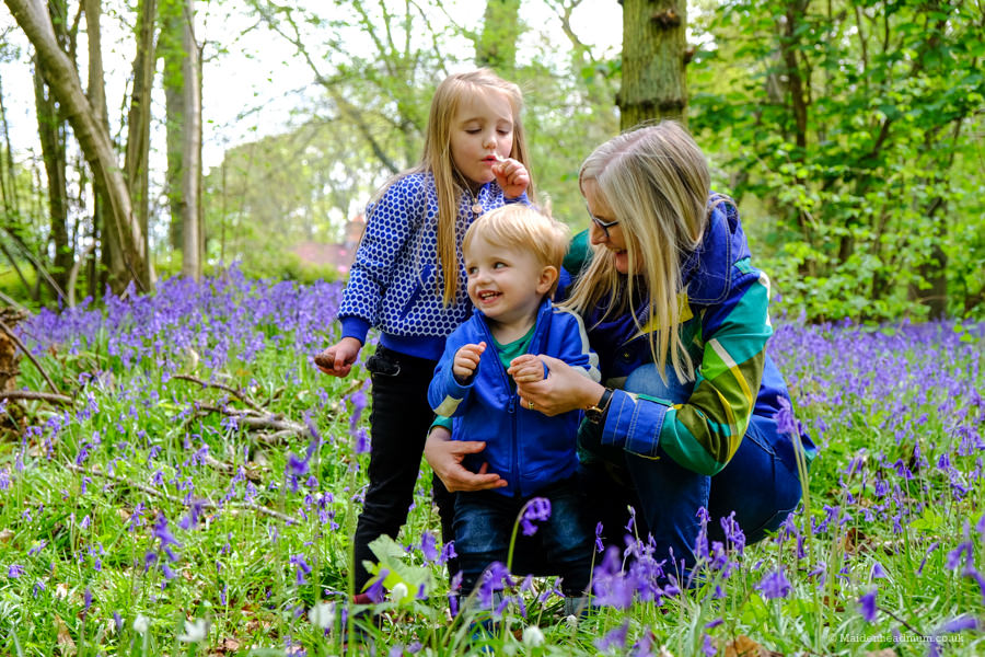 Children playing in bluebells in Bisham wood in Maidenhead