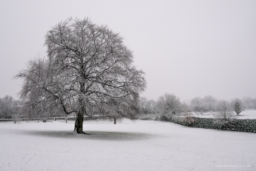 Tree in the snow in Boyn Hill Park in Maidenhead