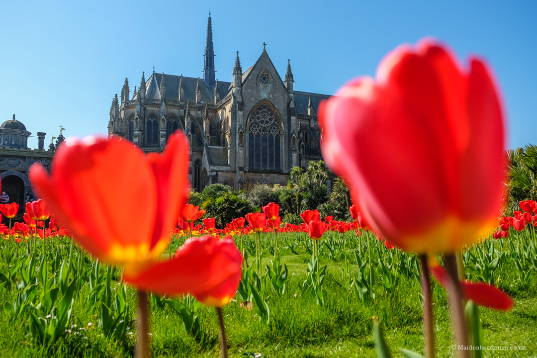 Red tulips in front of Arundel Cathedral